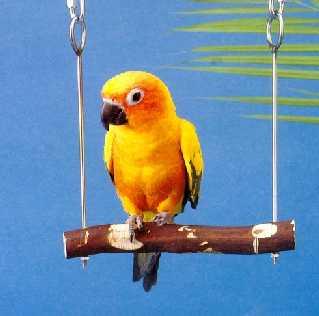 parrot504.jpg