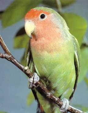 parrot510.jpg
